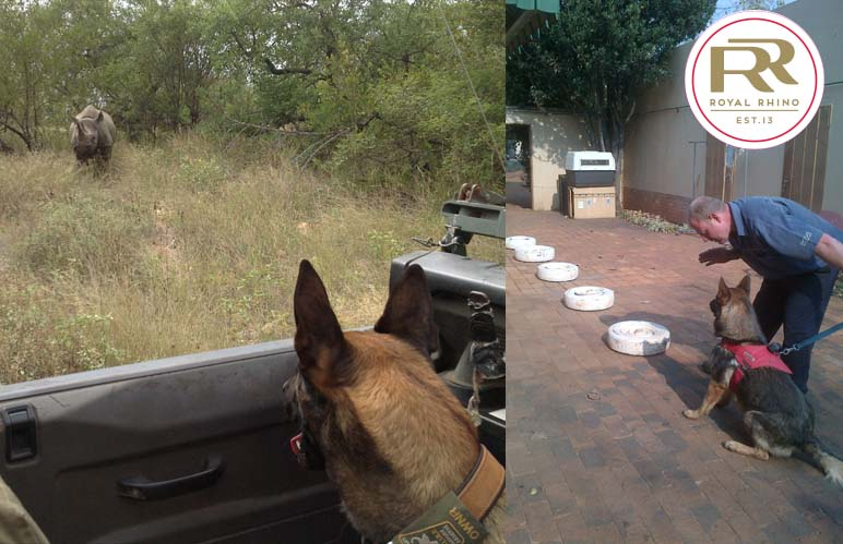 Canine 'inspectors' doing their part for rhinos
