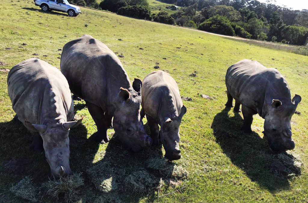 What 2018 Meant to Rhinos