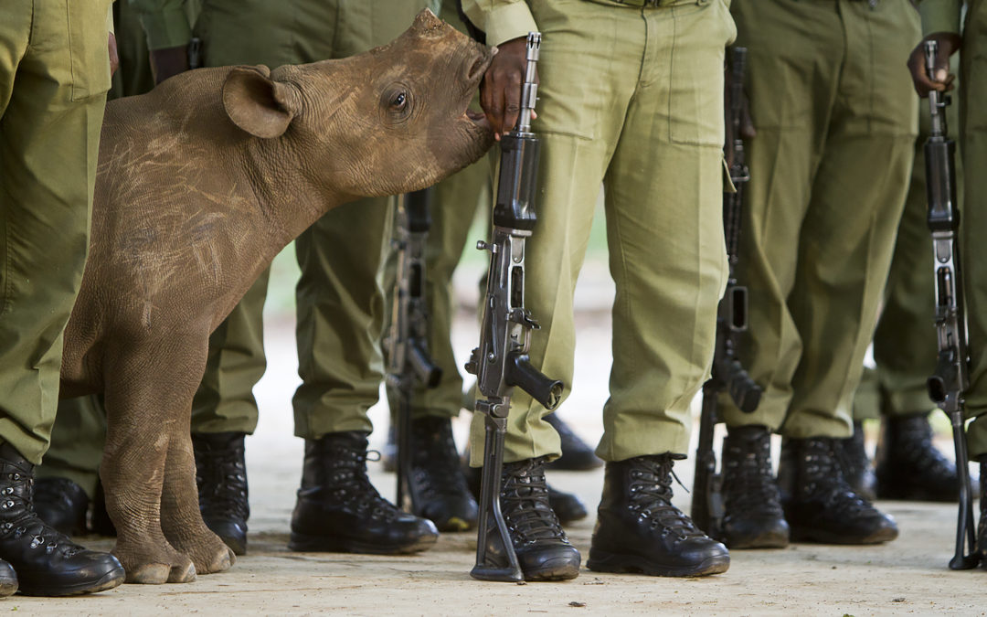 'Remembering Rhinos' with Top Wildlife Photographers