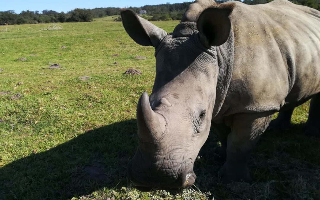 Finally, a strong decline in rhino poaching.